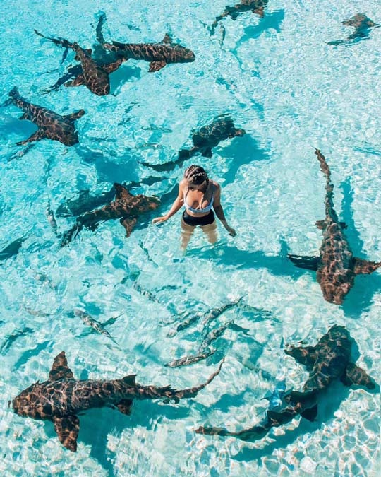 Lauren Nicolle, Denver Fashion Blogger, with sharks, Staniel Cay, Bahamas