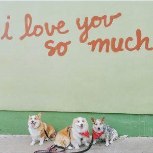 Lauren Nicolle, I love you wall - Austin, TX